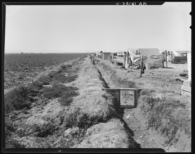 Forty families of drought and depression refugees camped by the roadside beside an irrigated pea field. A freeze which destroyed the pea crop threw practically every family in this camp on emergency relief. Nine miles from Calipatria, California