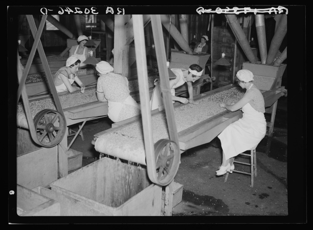 Girls removing foreign matter and inferior peas. Pea canning factory, Sun Prairie, Wisconsin