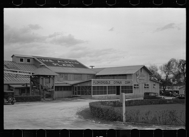Grapefruit canning plant, Lake Alfred, Polk County, Florida