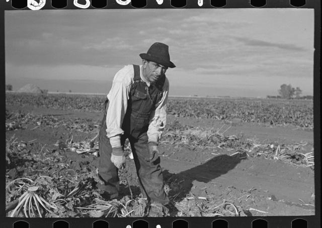 Mexican sugar beet worker, near Fisher, Minnesota