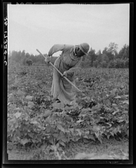 "Mississippi Negress hoeing cotton. She was born a slave ""two years before the surrender"""