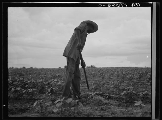 Negro hoeing cotton near Yazoo City, Mississippi