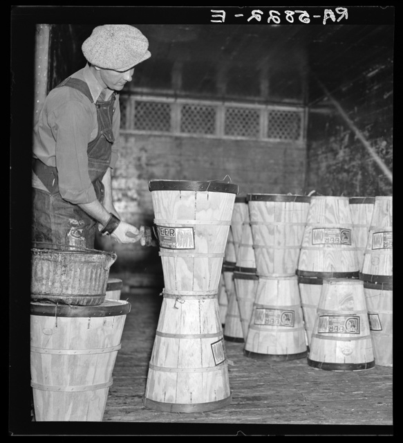Pasting labels on hampers of beans in the packing plant of Deerfield, Florida