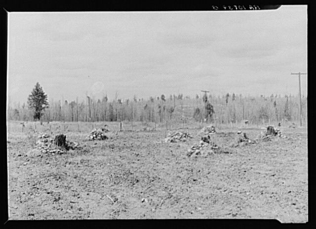 Piles of rock which have been cleared off a two-acre tract on Sando Evanoff's farm. Iron County, Michigan