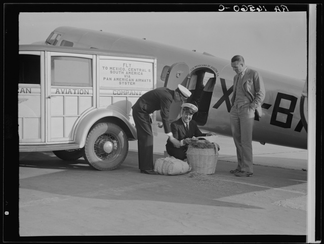 Plant quarantine inspector examining baggage brought into the United States by plane from Mexico. Glendale, California