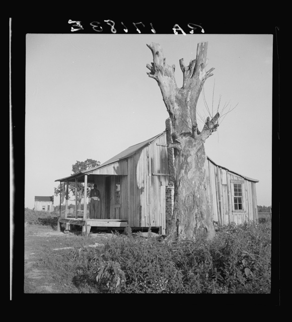 Plantation cabin of sharecropper. Washington County, Mississippi