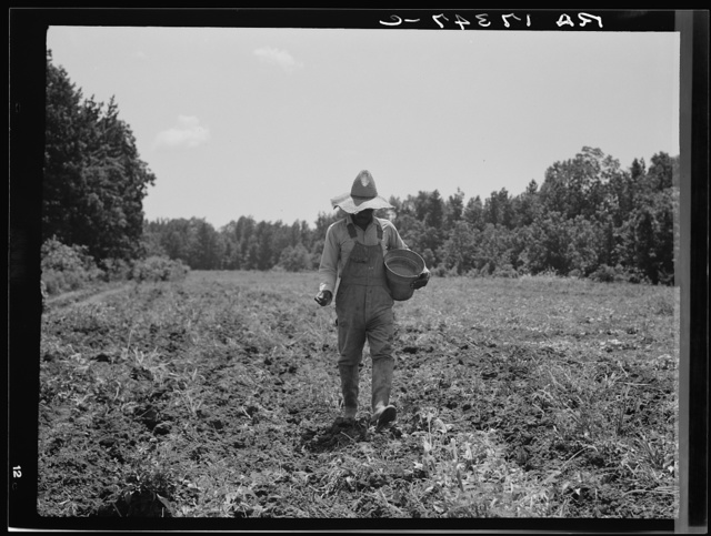 Planting corn in the community garden which supplies fresh vegetables to twenty-eight families. Delta cooperative farms. Hillhouse, Mississippi