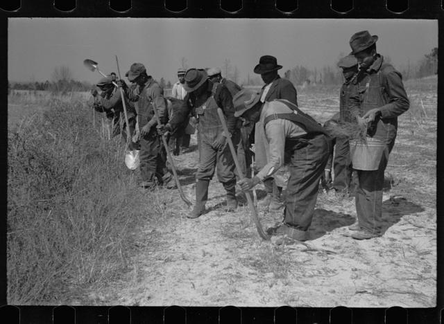 Planting slash pine, Macon County, Alabama, Tuskegee Project