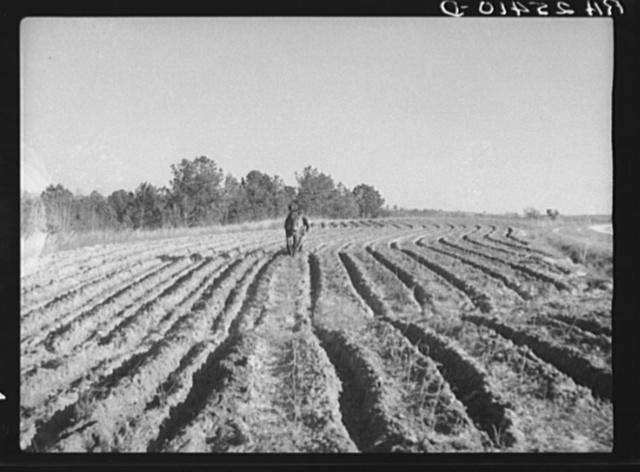 Plowing. Macon County, Alabama