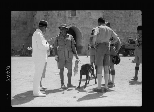 Police & their dogs at the Herod's Gate (Sept. 1937)