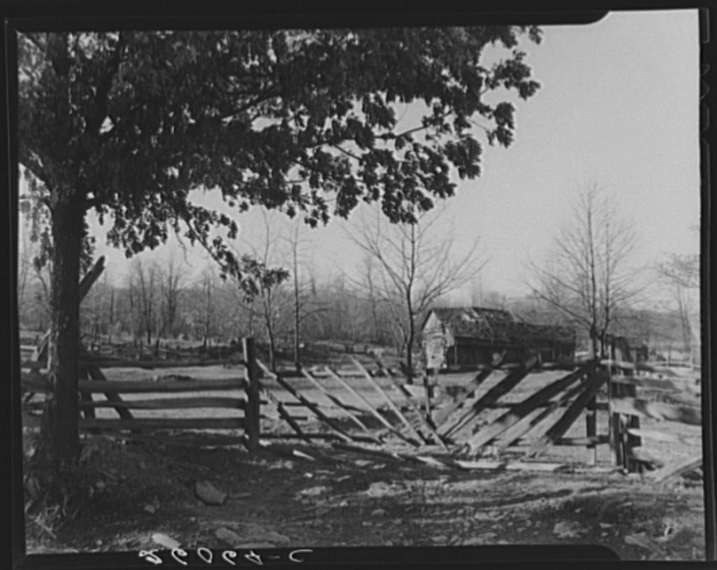 Rail fence and gate on Minnie Knox's farm. Garrett County, Maryland