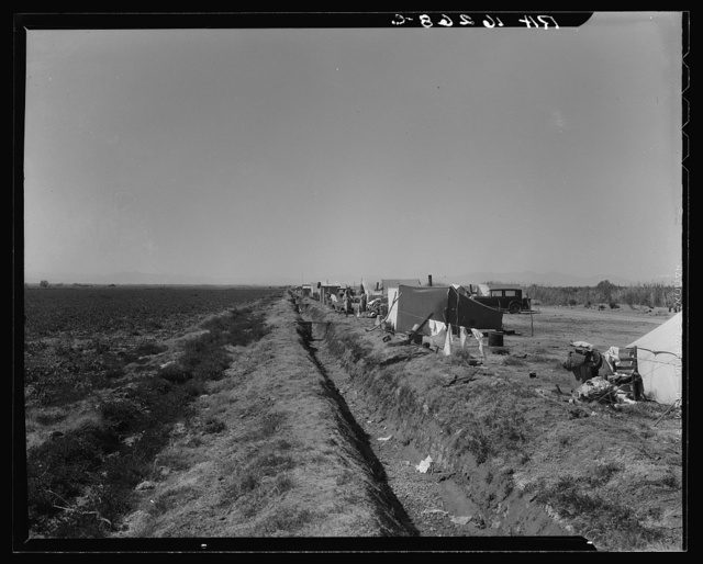 Squatter camp on county road near Calipatria. Forty families from the dust bowl have been camped here for months on the edge of the pea fields. There has been no work because the crop was frozen