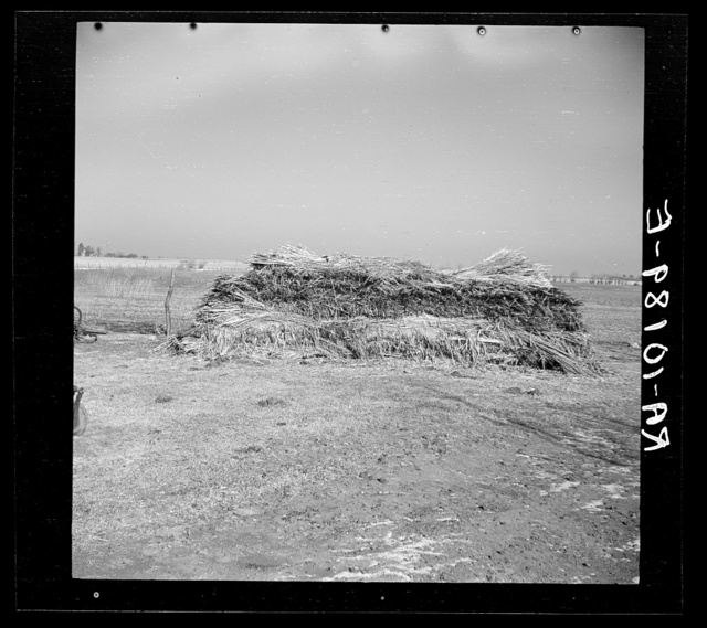 Stack of hemp grown on George Erickson's farm near Seneca, Illinois. He was induced to raise this crop on promise of a market for it. It is now rotting