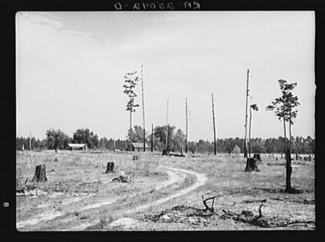 Submarginal farm on cut-over land. Hernando County, near Withlacoochee Land Use Project, Florida