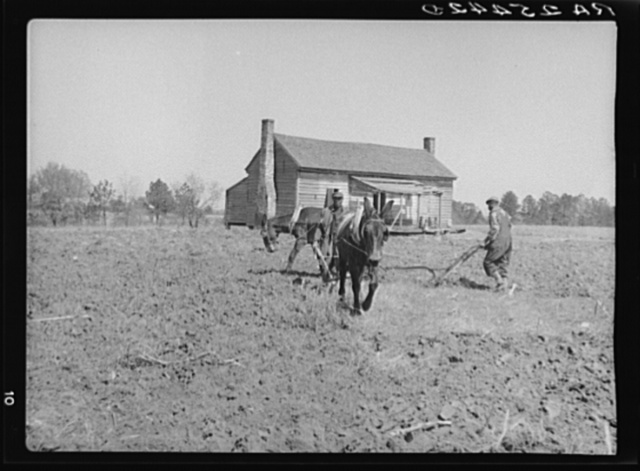 Tenant farmers plowing cooperatively. Macon County, Alabama
