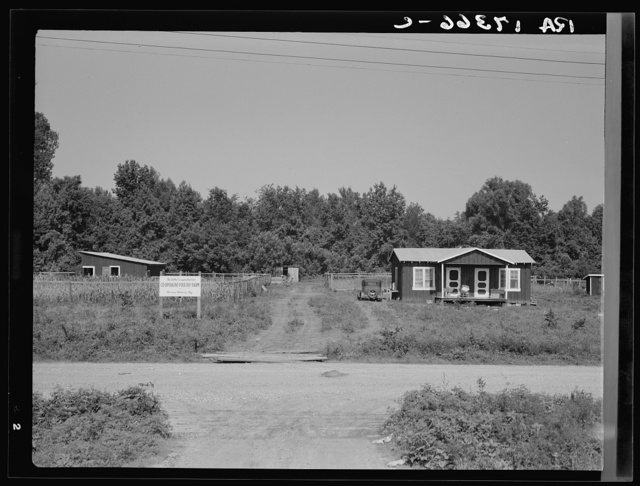 The poultry unit of the Delta cooperative farm. Hillhouse, Mississippi