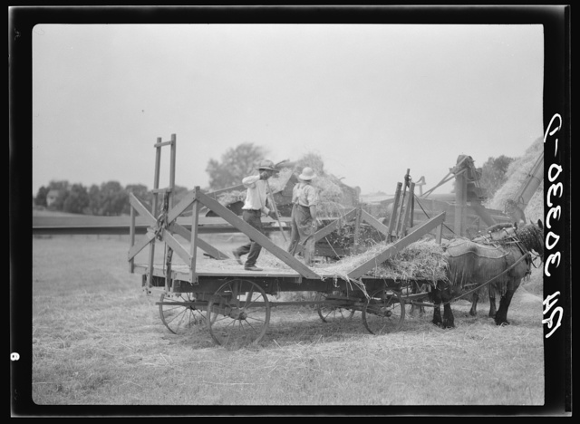 Threshing oats near Kewanee, Illinois