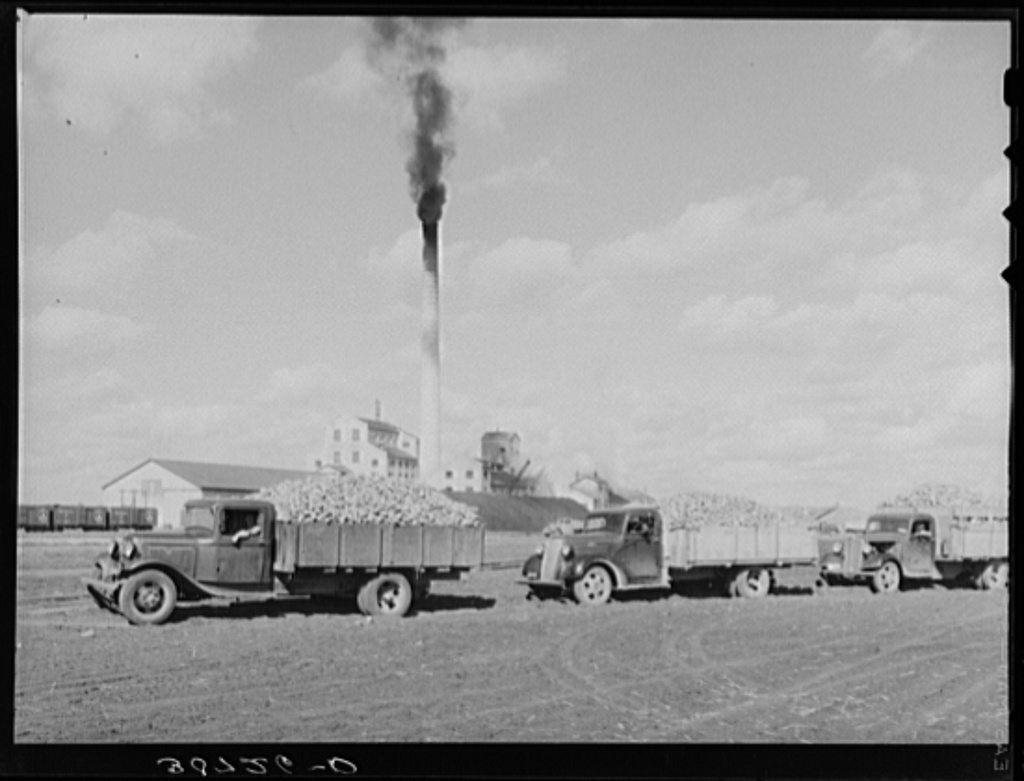 Trucks loaded with sugar beets, factory in background. East Grand Forks, Minnesota