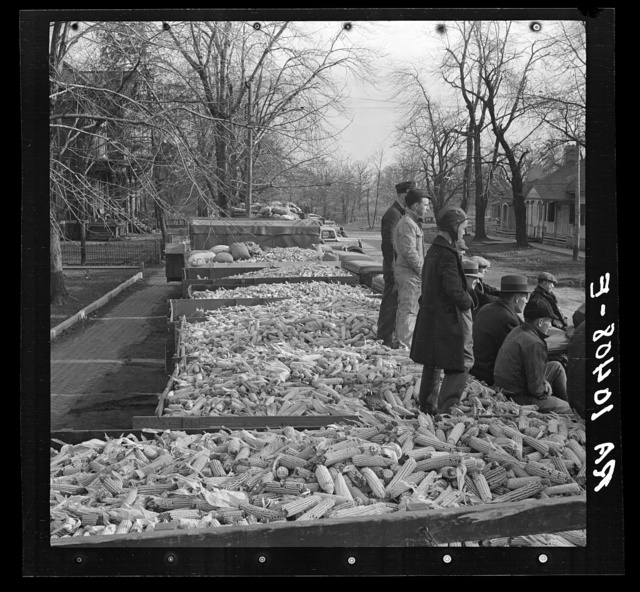 Twenty truckloads of corn sent as a gift from the farmers of Livingston County, Illinois, to southeastern Illinois flood area. Near Carmi, Illinois