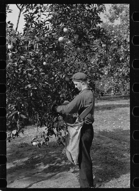 Florida photographs - Farm Security Administration / Office of War Information Photograph.