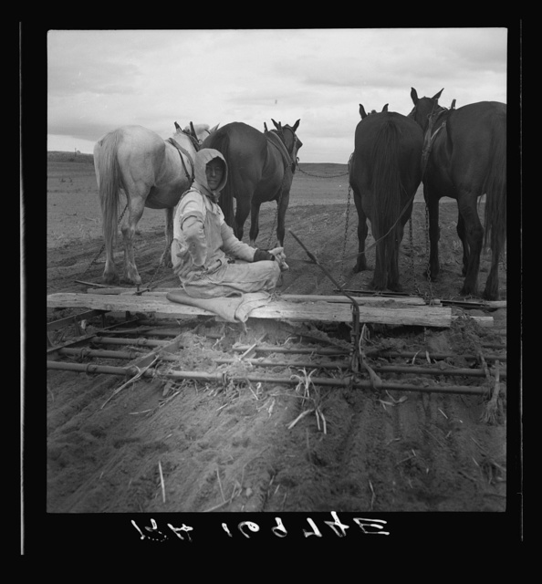 West Texas tenant farmer's wife. She has worked on this land with him for twenty years