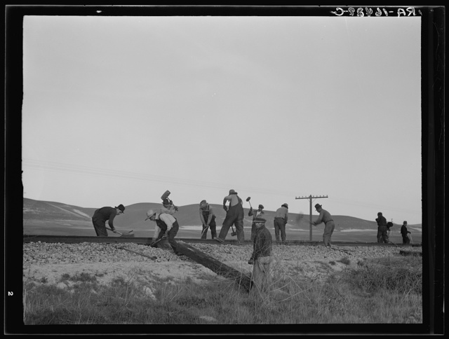 White section gang near King City, California. Before the depression this work was done entirely by Mexican labor