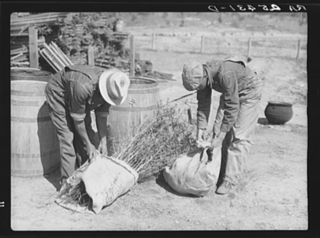 Work on reforestation project. Macon County, Alabama. Tuskegee Project