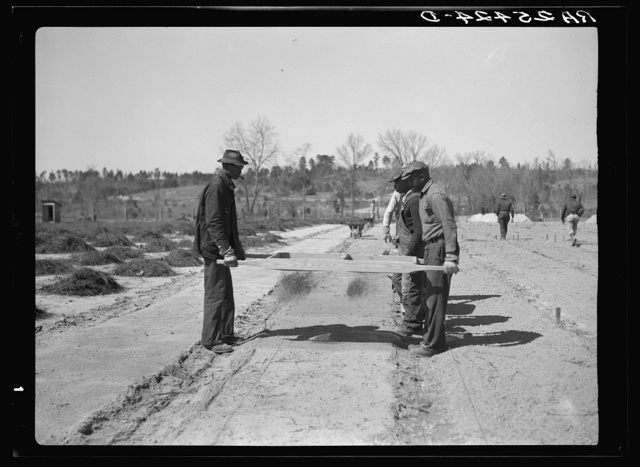 Work on reforestation project. Tuskegee Project, Macon County, Alabama