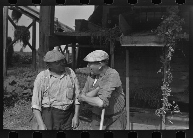 Workers at pea vinery talking, near Sun Prairie, Wisconsin