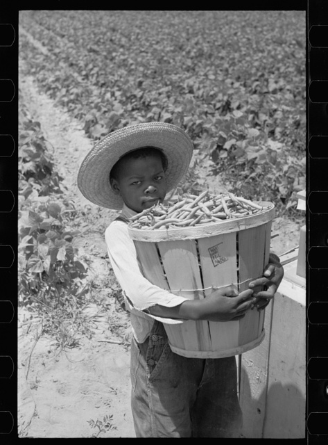 Young bean picker, Cambridge, Maryland