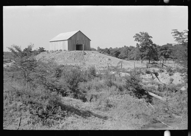 Barn on a hummock, New Madrid Fuse Plug Levee District, Missouri. These elevations are artificially made so as to be above flood level