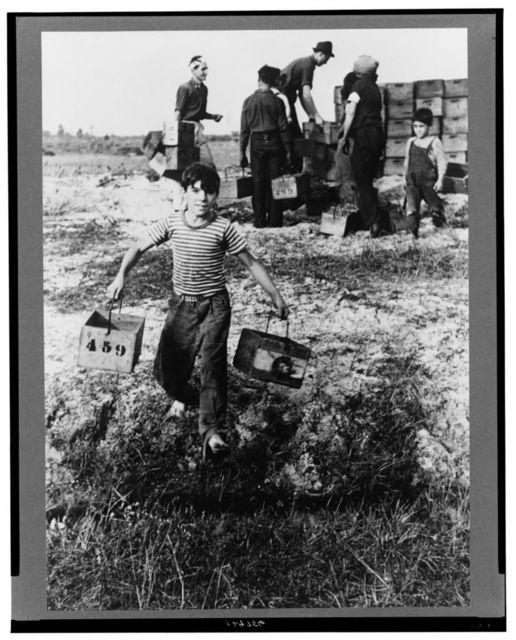 Boy leaving cranberry checking station at cranberry bog, Burlington County, New Jersey