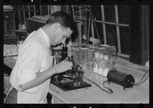 Chemist running microscopic test on sweet potato starch at plant, Laurel, Missisippi