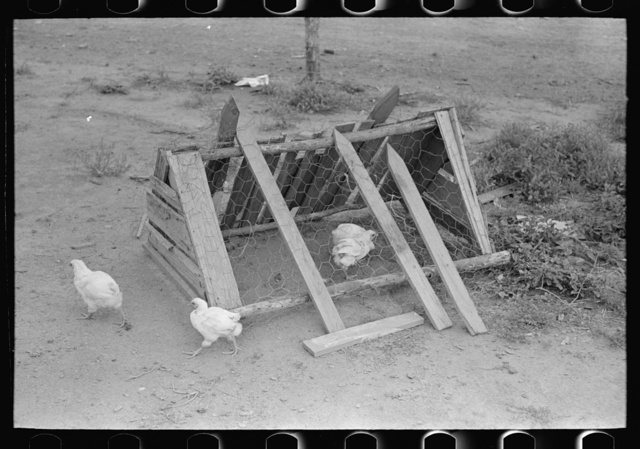 Chicken coop on sharecropper farm unit, Southeast Missouri Farms