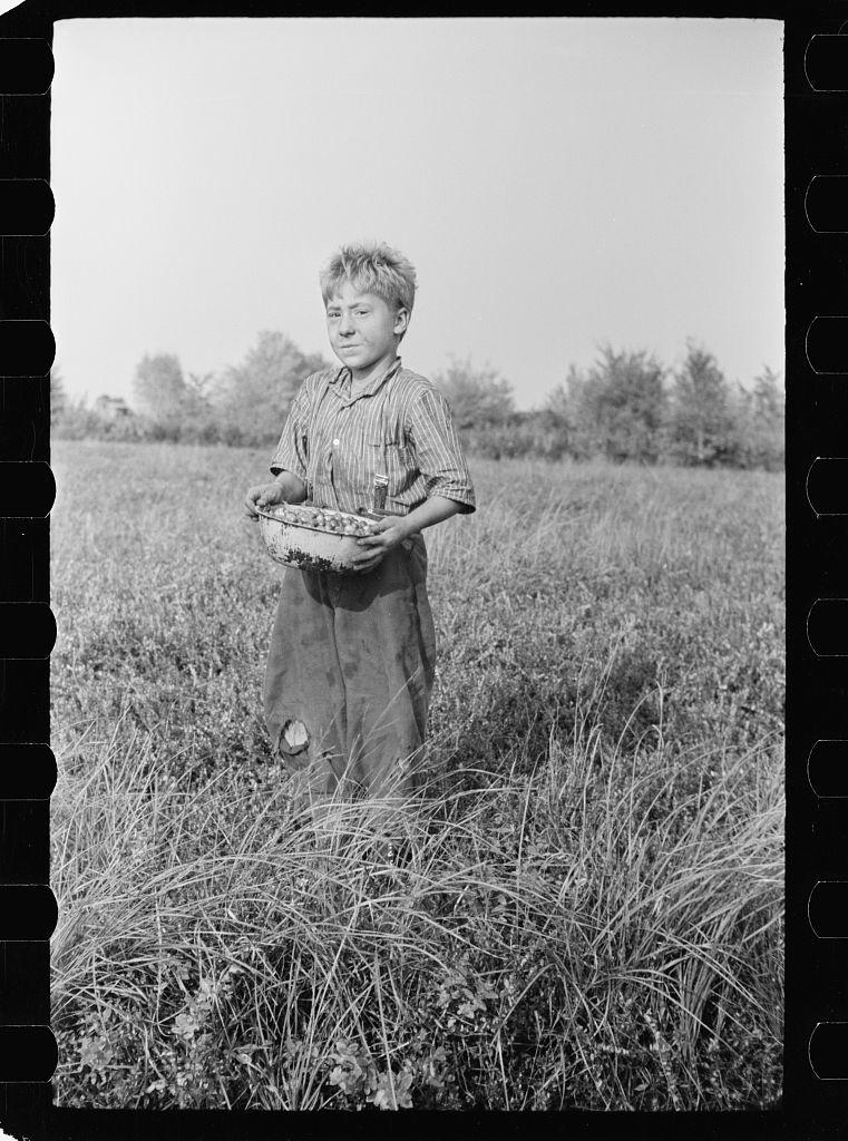 Child labor, cranberry bog, Burlington County, New Jersey