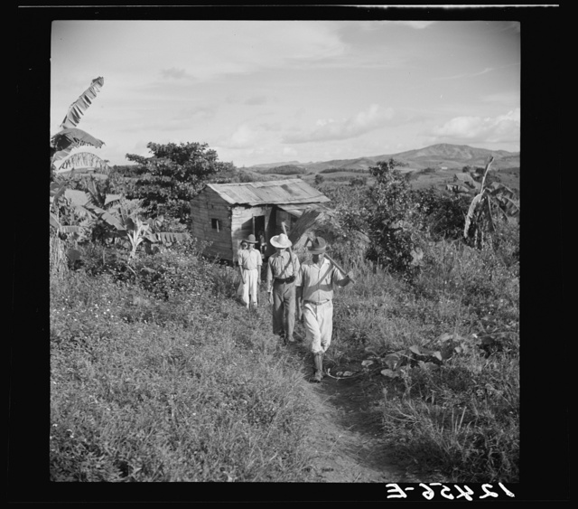 Cidra (vicinity), Puerto Rico. Jubaro tobacco workers leaving home for day labor in the fields