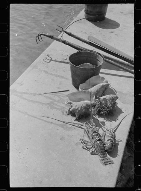 Conch shells and crawfish, Key West, Florida
