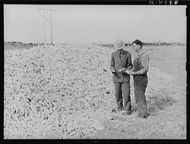 County supervisor examining corn belonging to rehabilitation client. Lincoln County, Nebraska