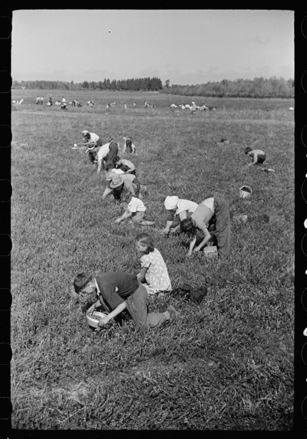 Cranberry pickers, Burlington County, New Jersey