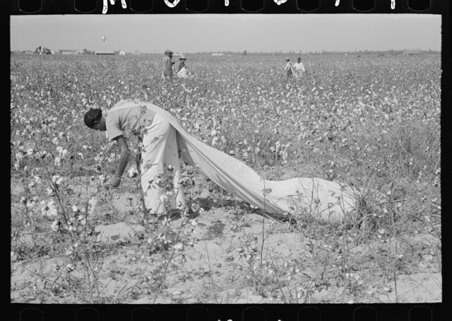 Daylaborer, cotton picker, Lake Dick Project, Arkansas