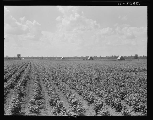 Delta plantation landscape. Arkansas