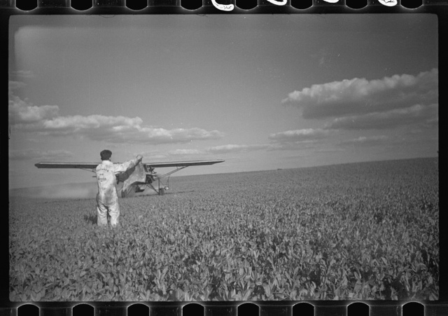"""Duster"" plane spraying insecticide over a field of beans. The mechanic in the foreground indicates the outside limit of the last ""swath"" which has settled by the time the plane returns. Note how low the plane flies. Beanfields like this, hundreds of acres in extent, are plowed, planted cultivated and even harvested by tractors. Seabrook Farms, Bridgeton, and Vineland, New Jersey"