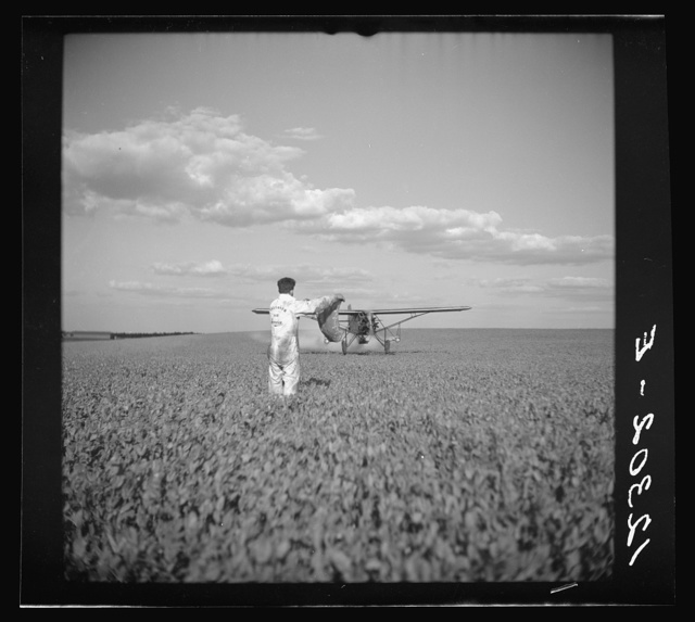 "Duster plane spraying insecticide over a field of beans. The mechanic in the foreground indicates the outside limit of the last ""swath"" which has settled by the time the plane returns. Note how low the plane flies. Bean fields like this, hundreds of acres in extent, are plowed, cultivated and even harvested by tractors. Seabrook Farms, between Bridgeton, and Vineland, New Jersey"