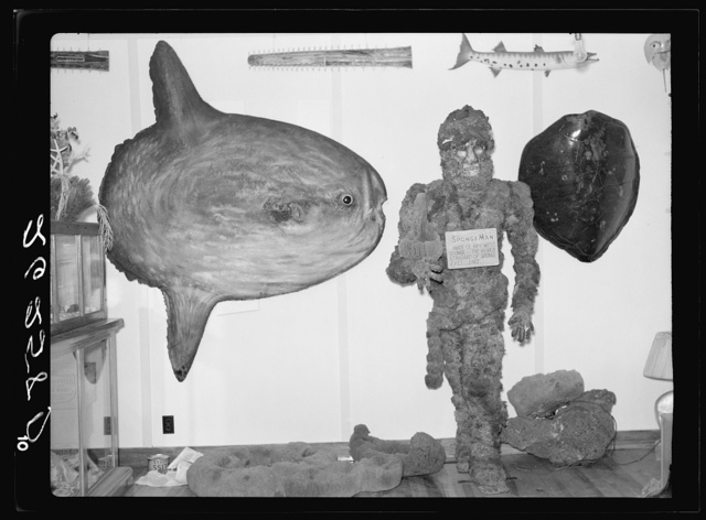 Exhibits in curio shop. Sunfish on left. Key West, Florida