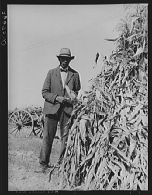 "Farm laborer who has seasonal employment on corporation farms housing corn grown on vacant lot. ""Eighty Acres,"" Glassboro, New Jersey"