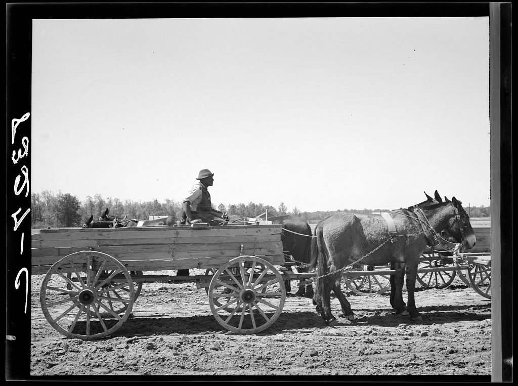Farmer waiting in line for supplies which he is buying cooperatively at Roanoke Farms, North Carolina