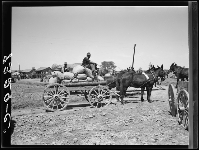 Farmer with his allotment of cotton seed which he has just bought cooperatively at Roanoke Farms, North Carolina