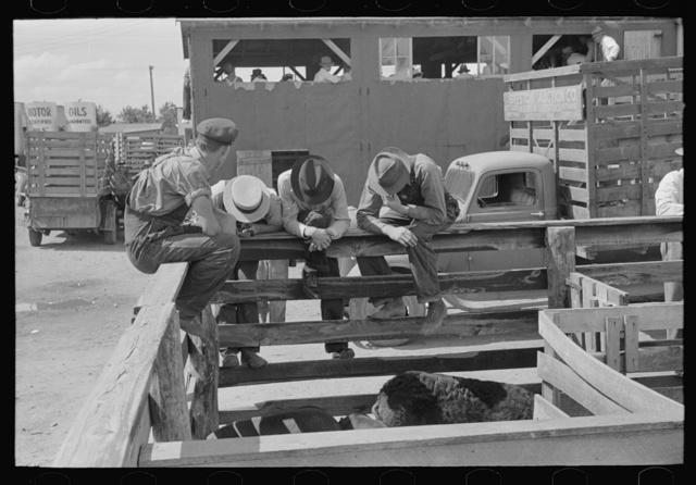 Farmers at auction looking at livestock, Sikeston, Missouri