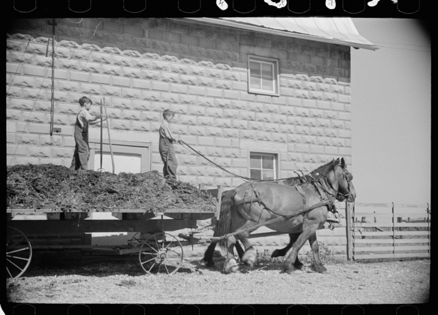 Farmer's sons unloading manure, Scioto Farms, Ohio
