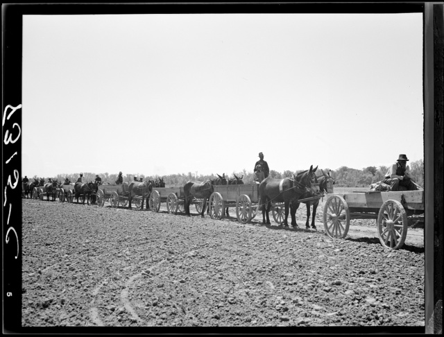 Farmers waiting in line for cotton seed, fence posts and wire which they are buying cooperatively. Roanoke Farms, North Carolina